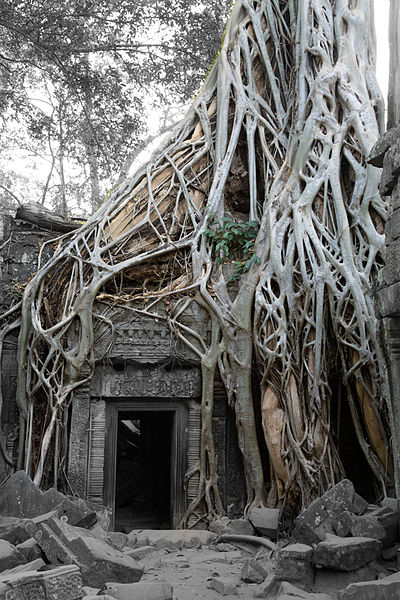 A_Slightly_Different_View_of_Siem_Reap_XVII_(CAMBODIA-TA_PHROM)_(1845778904)